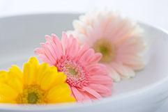 お花屋さんだからわかる!次のシーズンのおすすめのお花